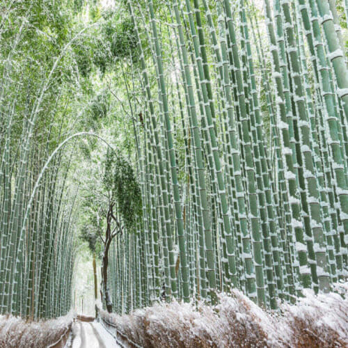 Дома из бамбука в россии дом за рубежом с александром носиком
