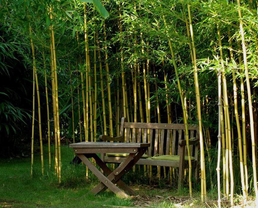 Дома из бамбука в россии снять квартиру в болгарии